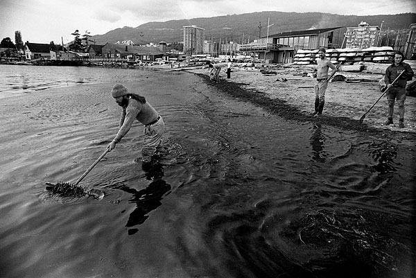 Oil spill West Vancouver 1973