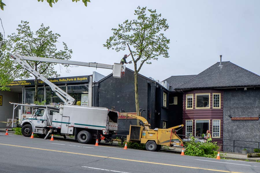 Removing trees in Vancouver 1