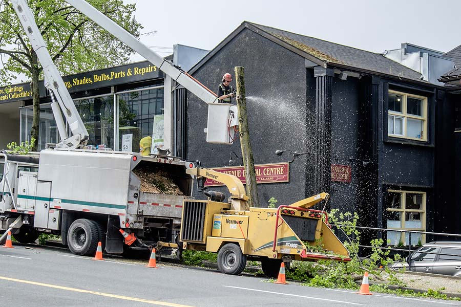 Removing trees in Vancouver 2